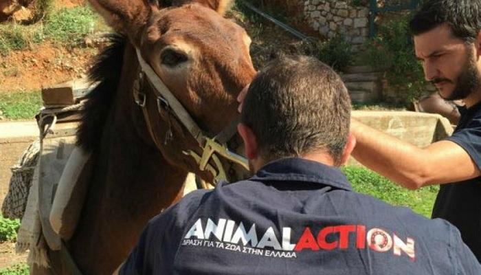 Πρόγραμμα φροντίδας ιπποειδών σε Σίφνο και Σέριφο.